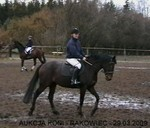 Jacek Krukowski Rakowiec Horse Auction - Show Jumping  Halama  mare sp. born: 24.03.1999 dark-bay height:166cm m. Henrietta/Zodiak f. Janeks xx/Dakota xx Starts: jumping 120-130cm Breeder SK Nowa Wioska