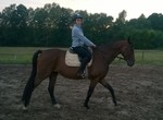 Gelding 6 years old