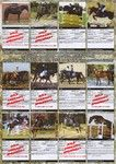 Horses ror sale