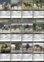 Okładka Albumu:  HORSES FOR SALE