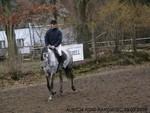 Jacek Krukowski Ottawa V Horse Auction - Rakowiec Ottawa V  - YouTube1