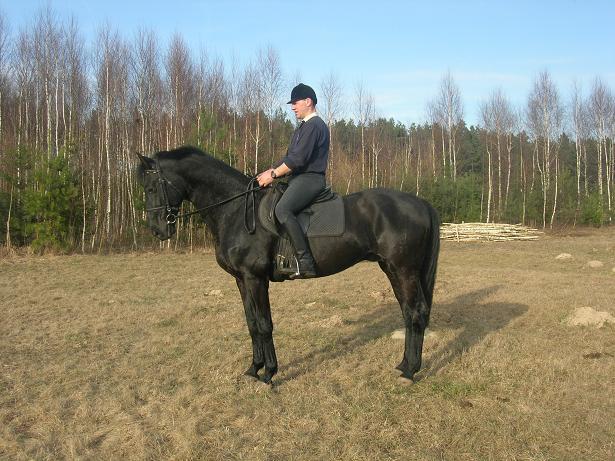 Jacek Krukowski Donner Prinz  stalion westf  born:27.06.2000  black height:170cm f.Donnerhall old / Donnerwetter  m.Aimee westf / Agatenango